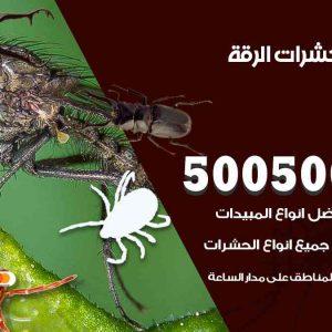 مكافحة حشرات الرقة